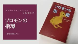ソロモンの指輪[動物行動学入門];表紙